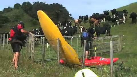 Coop's NZ Cows