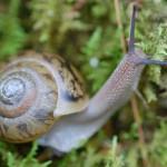 snail_gallaway.jpg