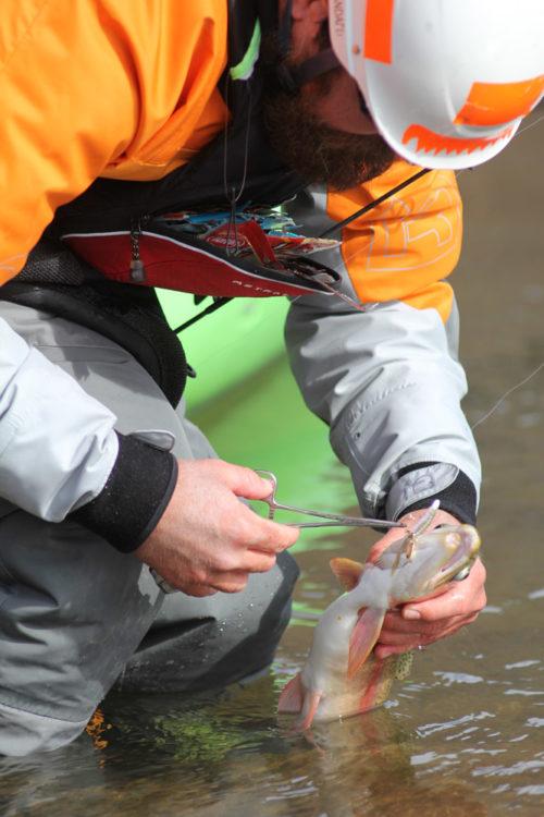 IMG_0340_felipe_trout