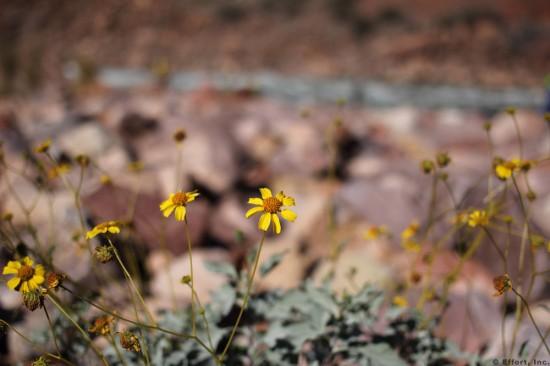 IMG_5540_granite_flower