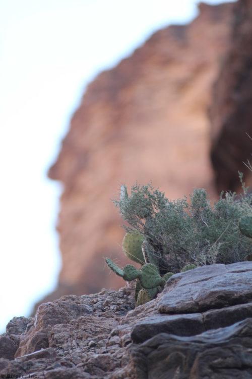 IMG_5730_cactus_cliff