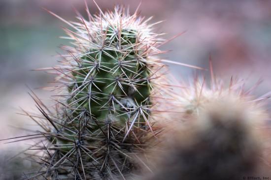 IMG_5829_cactus_closeup