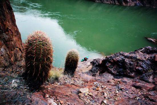 IMG_5959_cactus_chris_below